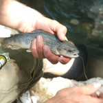 learn the art of Fly fishing in Switzerland