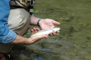 Upstream fly fishing